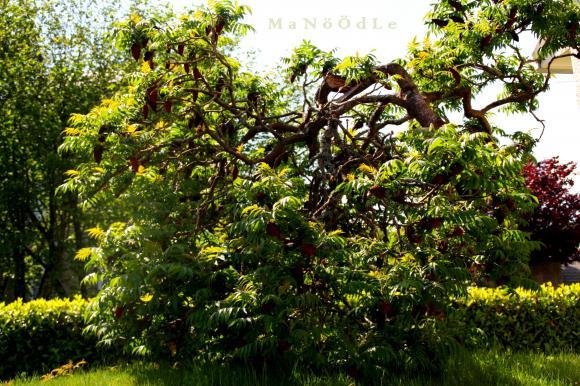 http://abricot-sponge.cowblog.fr/images/images2/IMG1966.jpg