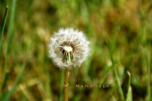 http://abricot-sponge.cowblog.fr/images/images2/IMG2047.jpg