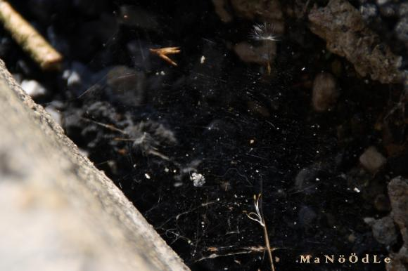 http://abricot-sponge.cowblog.fr/images/images2/IMG2058.jpg
