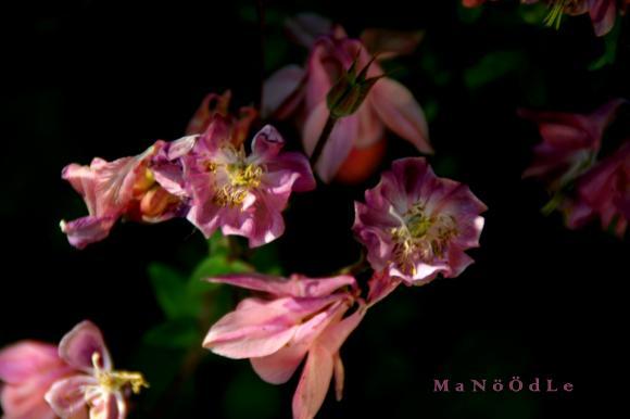 http://abricot-sponge.cowblog.fr/images/images2/IMG2059.jpg
