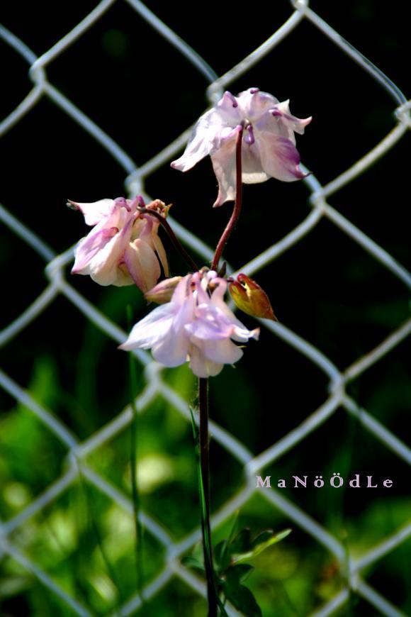 http://abricot-sponge.cowblog.fr/images/images2/IMG2060.jpg