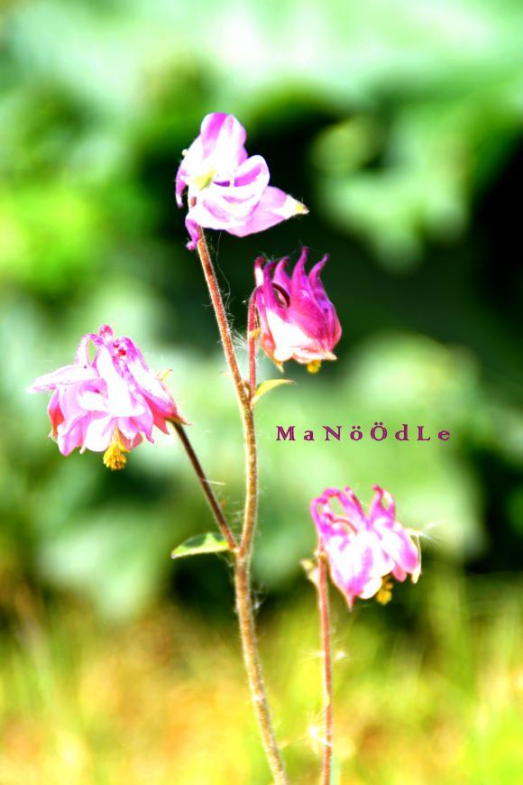 http://abricot-sponge.cowblog.fr/images/images2/IMG2120.jpg