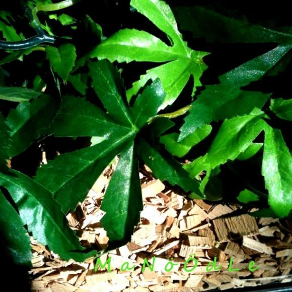 http://abricot-sponge.cowblog.fr/images/images3/171d42c9749242bea74e131ad47c0d687.jpg