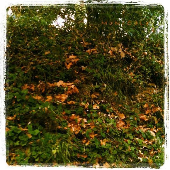 http://abricot-sponge.cowblog.fr/images/images4/3dbd5a840d6042488556dc80e104714c7.jpg